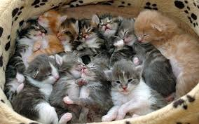 kittens galore